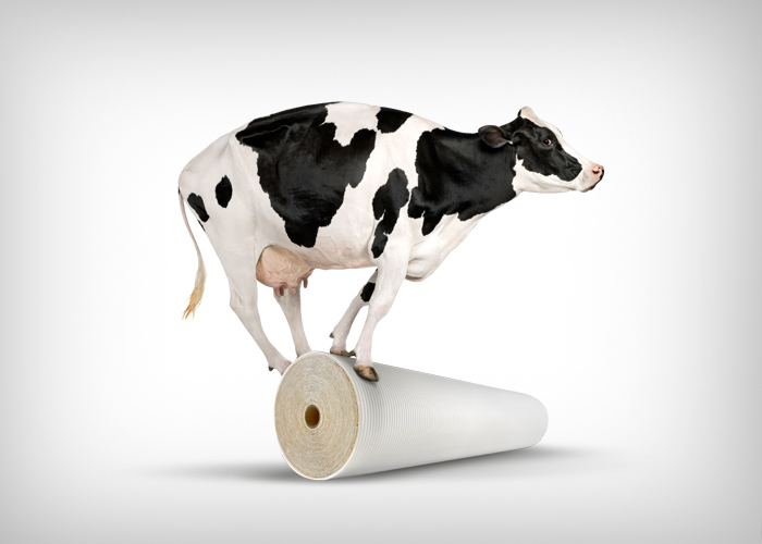 Dow-Cow